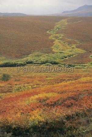 tundra in september including red patches