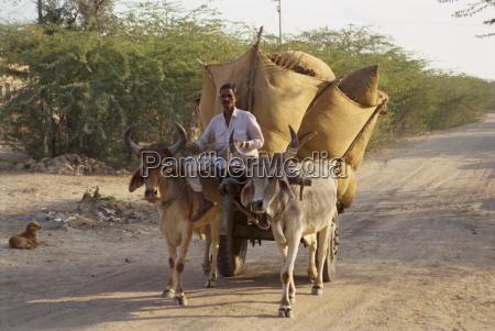bullock cart near jodhpur rajasthan state