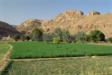 fertile fields and palm trees with