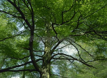 jazda podrozowanie drzewo drzewa trunk kufer
