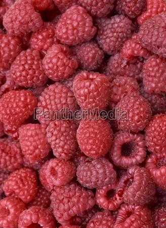 close up of fresh raspberries