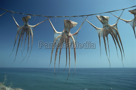 octopi hung out to dry nerja