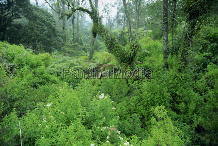 lush forest growing on the fertile