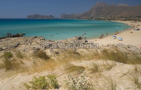 beach grass growing in sand dunes