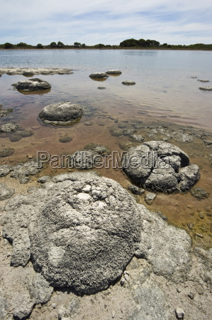 stromatolites one of the most ancient