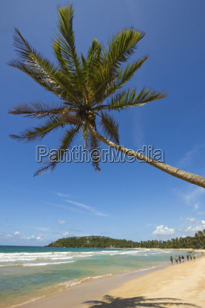 palm tree and west point of