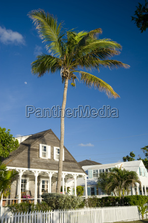 a palm tree growing over a