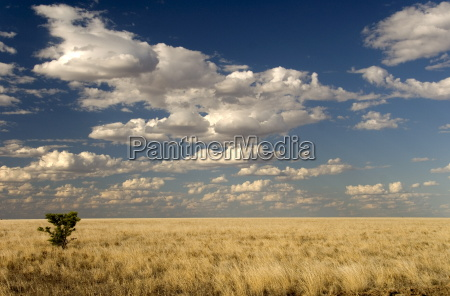 the dead flat grasslands of the