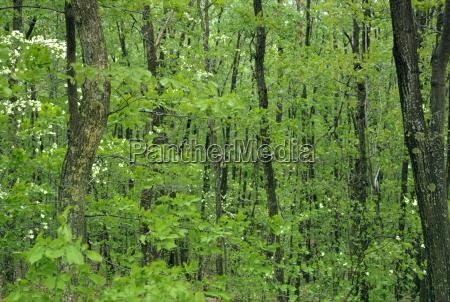 decidous woodland west virginia united states