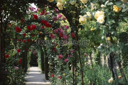 arches covered with roses generalife gardens