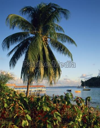 jetty and palm tree villa bay