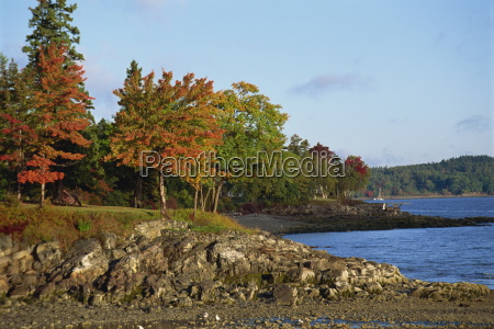 rocky shoreline and trees in fall