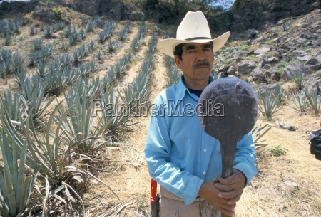 tequila plantation worker mexico north america