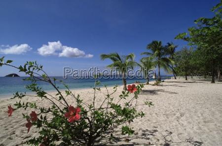 palm island near young island the