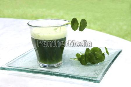 brahmi leaves centella asiatica and a