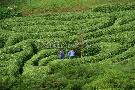 two people lost in glendurgan maze