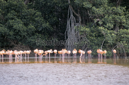 flamingos celestun national wildlife refuge celestun