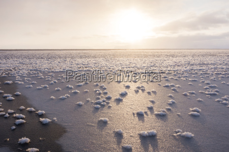 frost flowers formed on thin sea