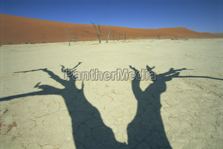 shadows of dead trees dead vlei