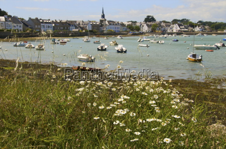 harbour and church panorama with daisies