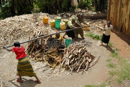 women pressing sugar cane tanzania east