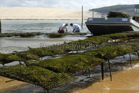 oyster fishermen grading oysters with the