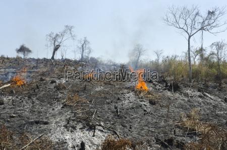 a burnt hill side after deforestation