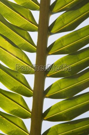 palm leaf nicoya pennisula costa rica