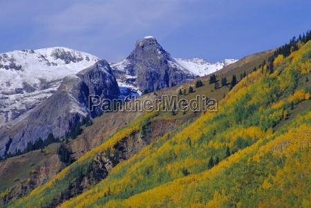 aspen pines and snowy peaks san