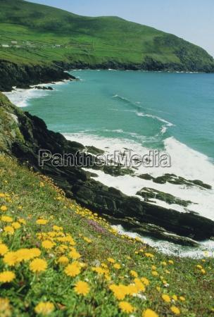 irish summer colours slea head dingle