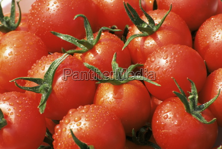 close up of tomatoes england united