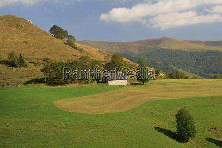 tranquil scene in agricultural landscape of