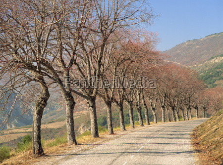 bare trees line a rural road