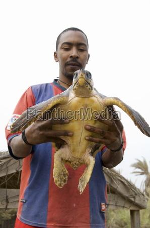 turtles island of sal salt cape