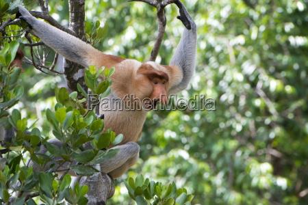 viaggio viaggiare colore albero animale mammifero