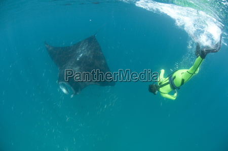 scientist free diving to make a