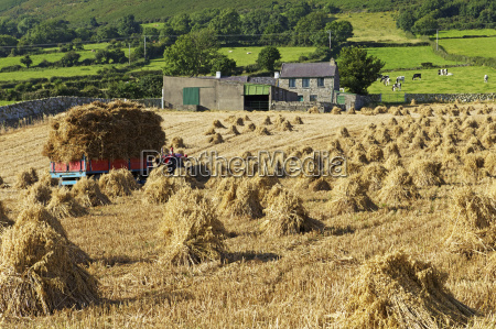 oat stooks knockshee mourne mountains county