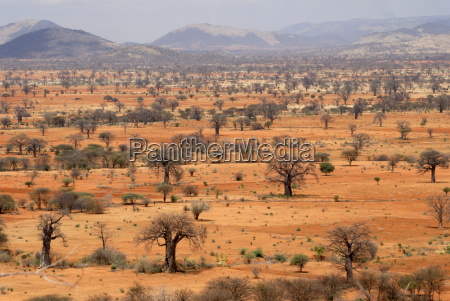 masai steppe near arusha tanzania east