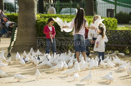 pigeons at plaza de america parque