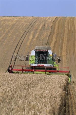 claas combine harvester harvesting wheat grown