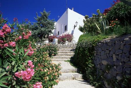 flower bordered flight of steps in