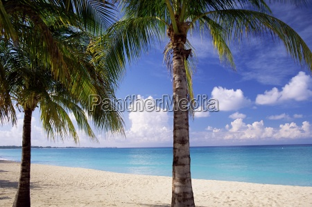 palm trees beach and still turquoise