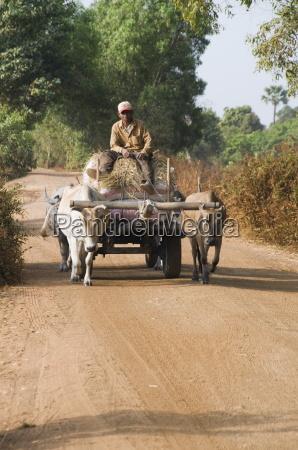 ox cart cambodia indochina southeast asia