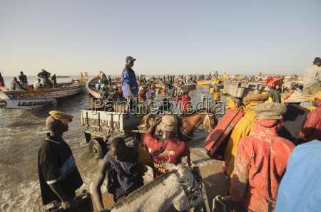 unloading fishing boats pirogues mbour fish