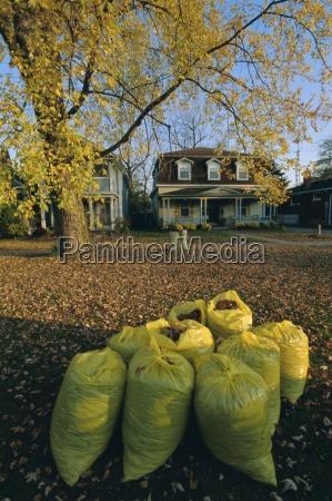 bags of fallen autumn leaves toronto