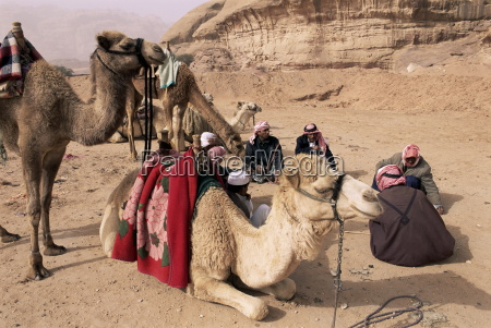 group of bedouin and camels wadi