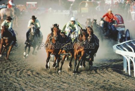 chuck wagon race calgary stampede alberta