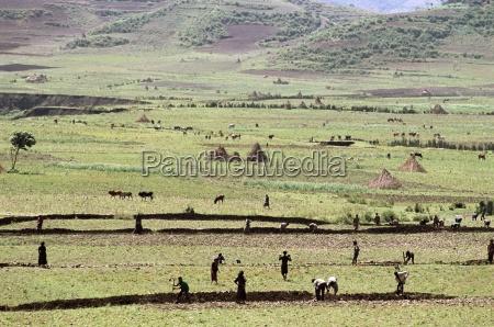 working on farmland near sentebe choa