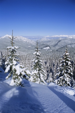 snow covered pines in the demanovska