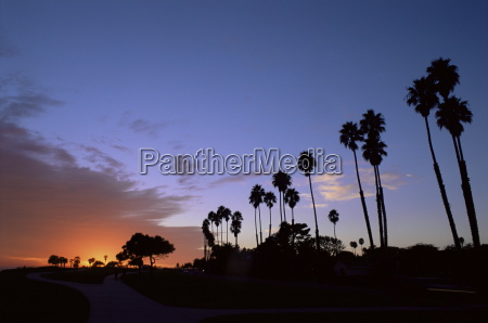 palm trees in silhouette in park